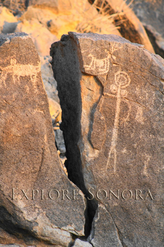 Petroglyphs of animals and a human form, near Caborca, Sonora