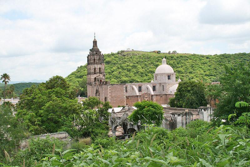 vegetation surrounding the pueblo of alamos, sonora