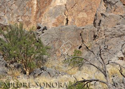 Petroglyph grouping near Caborca, Sonora, Mexico