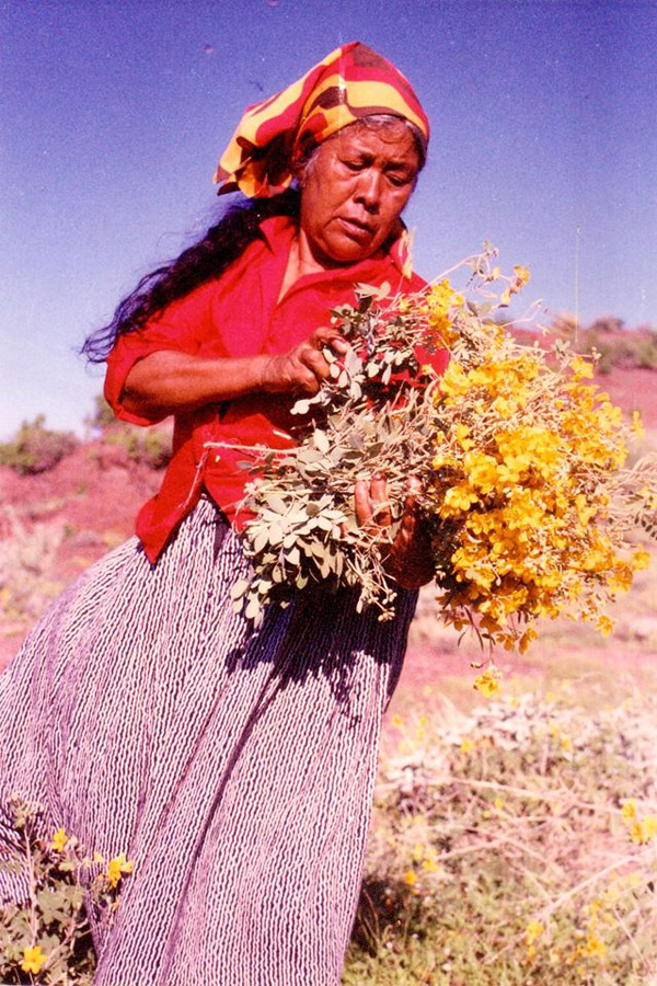 Carmelita Burgos collects medicinal plants - photo provided by ECOIX