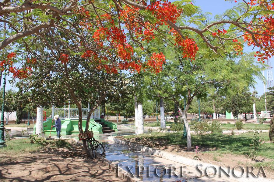 The plaza in Etchojoa, Sonora