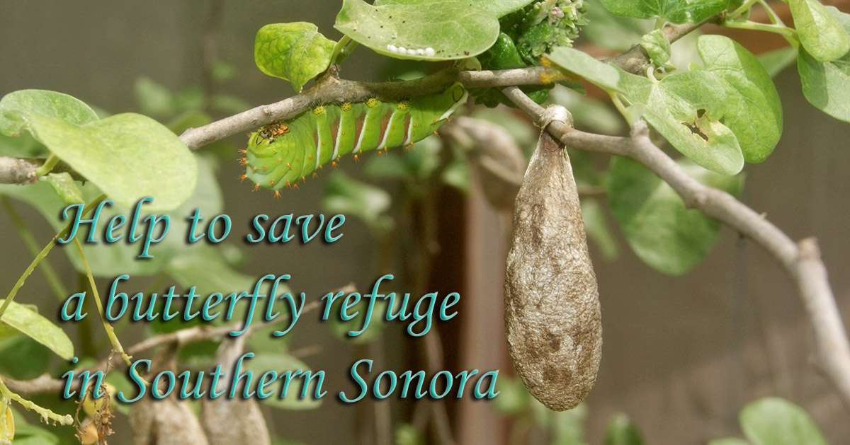 Help to save a Sonora Butterfly Refuge